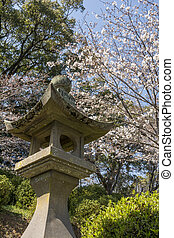 Stone lantern of shinto shrine under yoshino cherry blossoms...