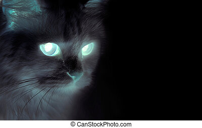 Spooky black cat with shining eyes