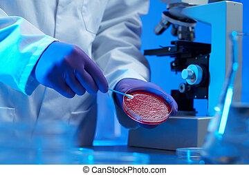 scientist examining culture sample - Scientist examining...