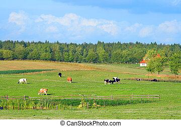 Polish summer rural landscape