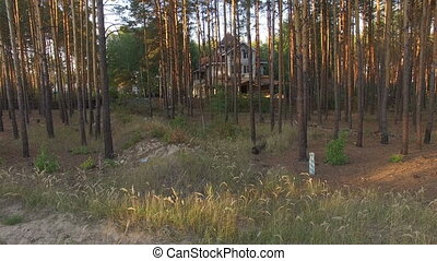 beautiful house in the pine forest