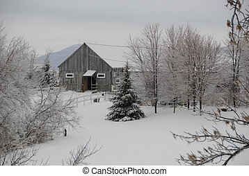 Winter scene showing fresh snow in a back country field