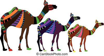 caravan - group of camels on a white background in ethnic...