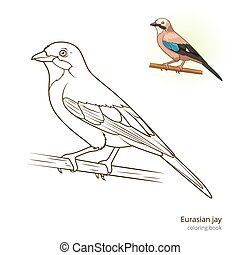 Eurasian jay bird coloring book vector - Eurasian jay bird...
