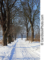 Winter scene - Snowy road between the trees during...