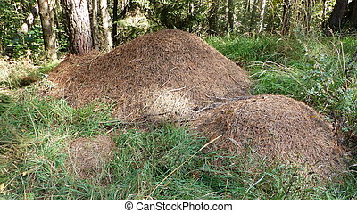 Anthill in forest - Three different sized anthill in forest