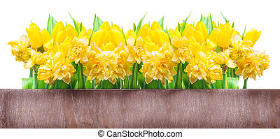 Easter card, daffodils, tulips