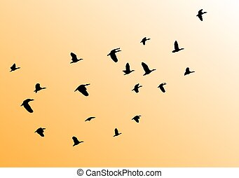 birds flying - vector flying birds