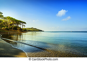 Punta Ala, Pine tree group, beach and sea bay Tuscany, Italy...