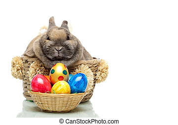 Little cute Easter bunny sitting in a basket
