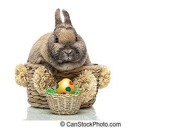 Cute little Easter bunny breeding in basket