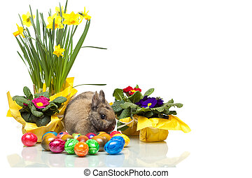 One cute Easter Rabitt sitting among yellow daffodil,...