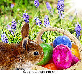 Easter Bunny hides eggs