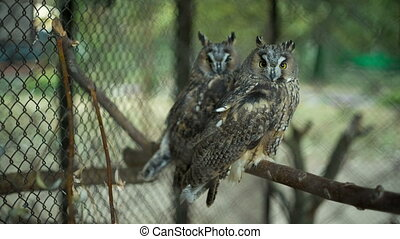 Owls in the zoo - two owls in the zoo