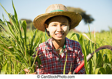 Traditional young Asian Burmese female farmer