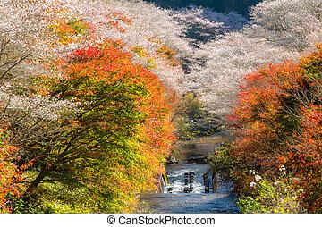 Nagoya, Obara Sakura in autumn - Nagoya, Obara Autumn...