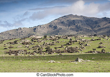 Krowy, Pastwiskowy, w, przedimek określony przed...