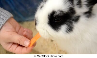 baby feeding rabbit. Rabbit Feeding Carrot
