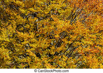Autumn background in woods. Horizontal detailed view of a forest, top-side of a mountain, in a sunny autumn day.