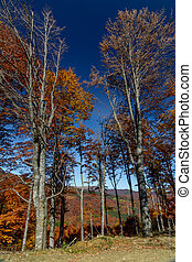 Autumn background in woods. Horizontal view of a forest, top-side of a hill, in a sunny autumn day.