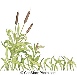 cartoon reeds background. vector
