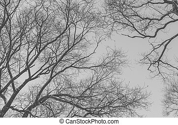 Branches Of The Tree - Black and white photo of the branches...