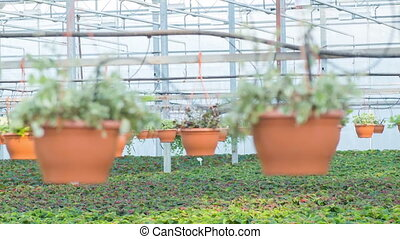 Wide variety of plants in the greenhouse - Greens assortment...