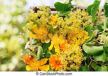 Medicinal herbs, medicinal plants, Homeopathy