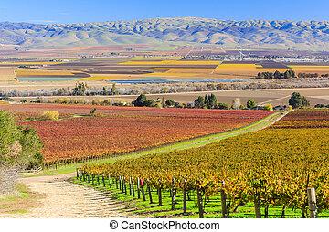 Salinas Valley - Grapes at Salinas Valley