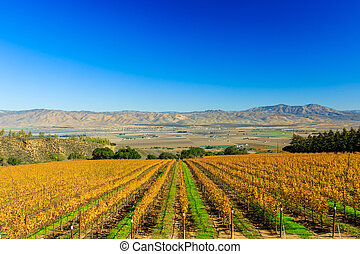 Salinas Valley - Grapes at Salinas Valley