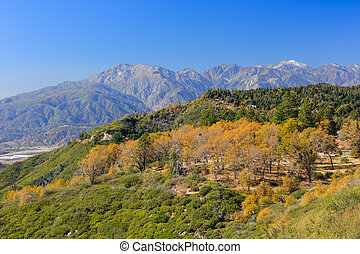 San bernardino mountains, autumn time