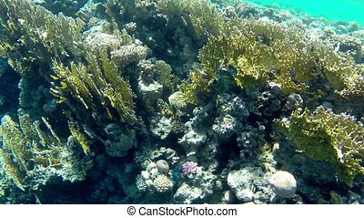 View seabed of Red Sea Egypt, Africa - Amazing view seabed...