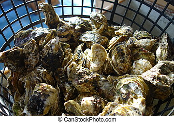 Delicious seafood - raw oyster - Busket of delicious seafood...