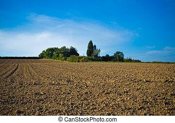 Field - Plants and soil in a field