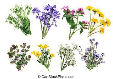 primavera, wildflowers,