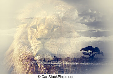 Double exposure of lion and Mount Kilimanjaro savanna...