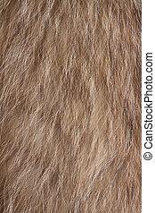 Fur texture