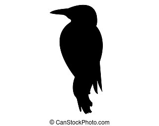 Woodpecker Bird Silhouette Vector EPS 10