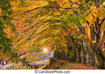 Maple Corridor of Japan - Maple Corridor near Kawaguchi Lake...