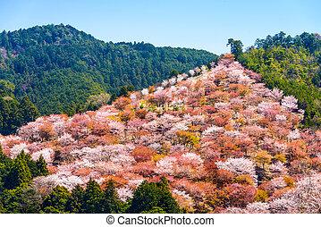 Yoshinoyama, Nara, Japan spring landscape