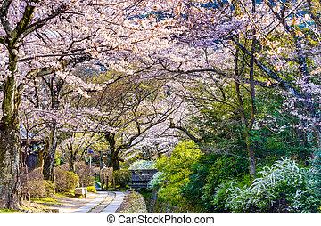 Philosopher's, Walk, in, Kyoto