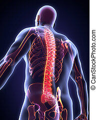 Human Male Spine Anatomy Illustration 3D render