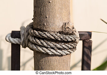 Old rope on tree - Big old and dirty rope bundle on small...