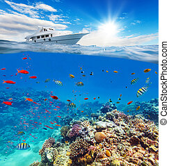 Underwater coral reef with horizon and water surface