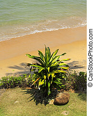 ornamental plant - an ornamental pot plant near a tropical...