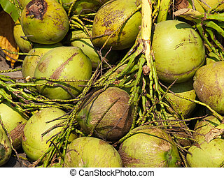 Pile of freshly picked coconuts