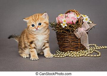 Ginger kitten and basket of flowers - Ginger kitten, a breed...