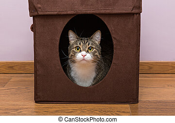 Personal home for the cat - Grey cat sitting in your...