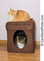 House for cats - Grey and red cat house is divided on two...