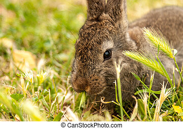 Wild Rabbit - Wild rabbit  sitting in long green grass